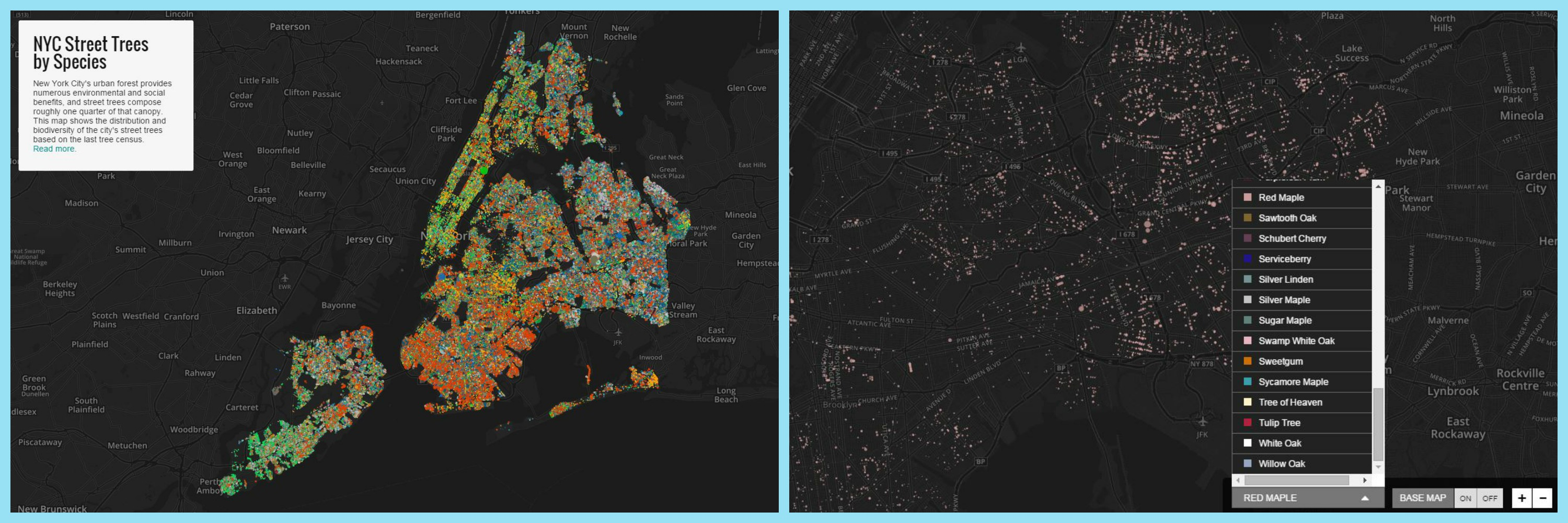 Data Stories of the week - Trees in NYC